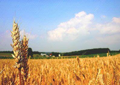 شناسایی ۳۲ نخبه در بخش کشاورزی