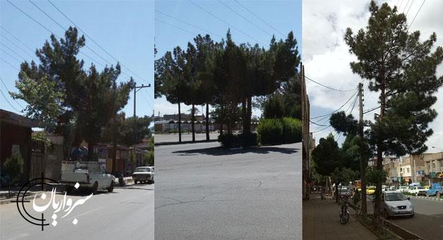 tree-gallery-t