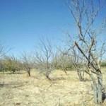 کشاورزان جوینی چشم به راه تسهیلات خشکسالی