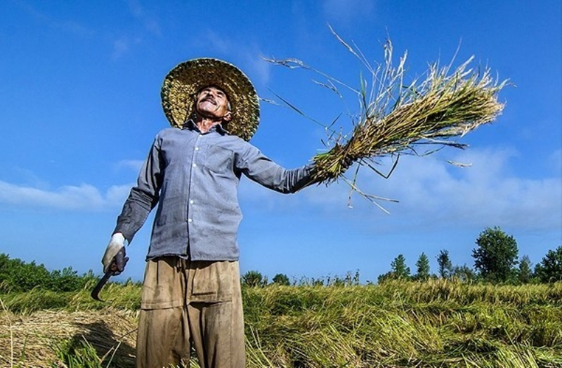 ۱۱۵درصد تعهد اشتغال کشاورزی خوشاب محقق شد