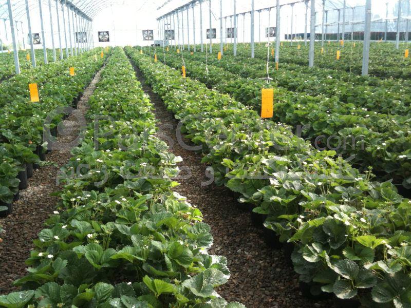 بهرهبرداری از یک واحد گلخانهای صیفیجات در سبزوار