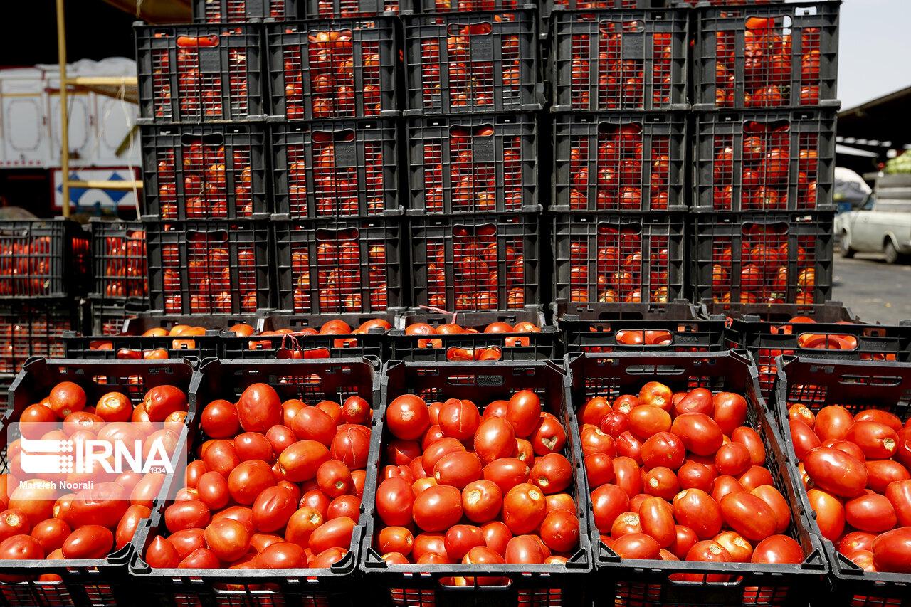 ۶۰۰ تن گوجهفرنگی از سبزوار صادر شد