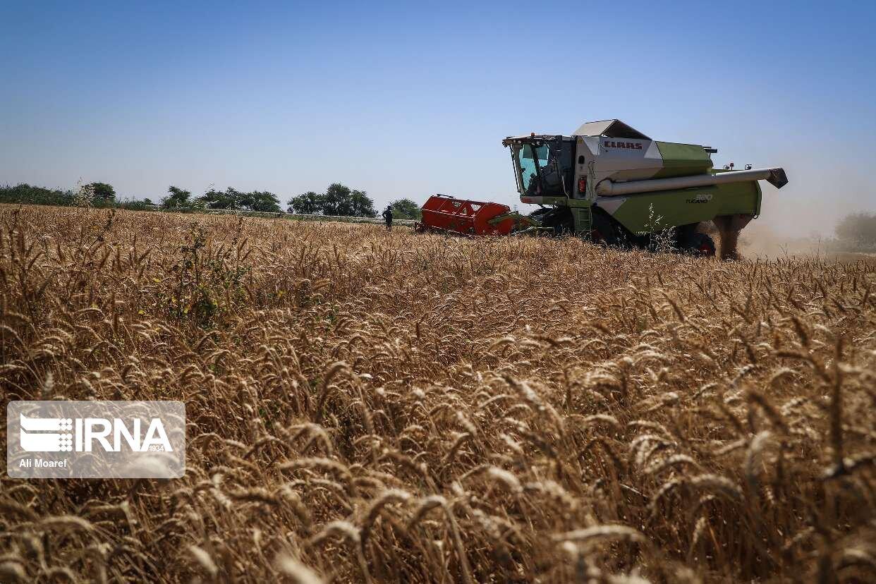 ۳۵ معین اقتصادی خراسان رضوی در بخش کشاورزی فعال هستند