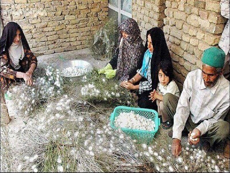 ۱۱۰۰ روستای خراسان رضوی طرح کسبوکار دارند