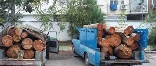 دستگیری ۳ متهم به سرقت درختان سبز چنار در سبزوار
