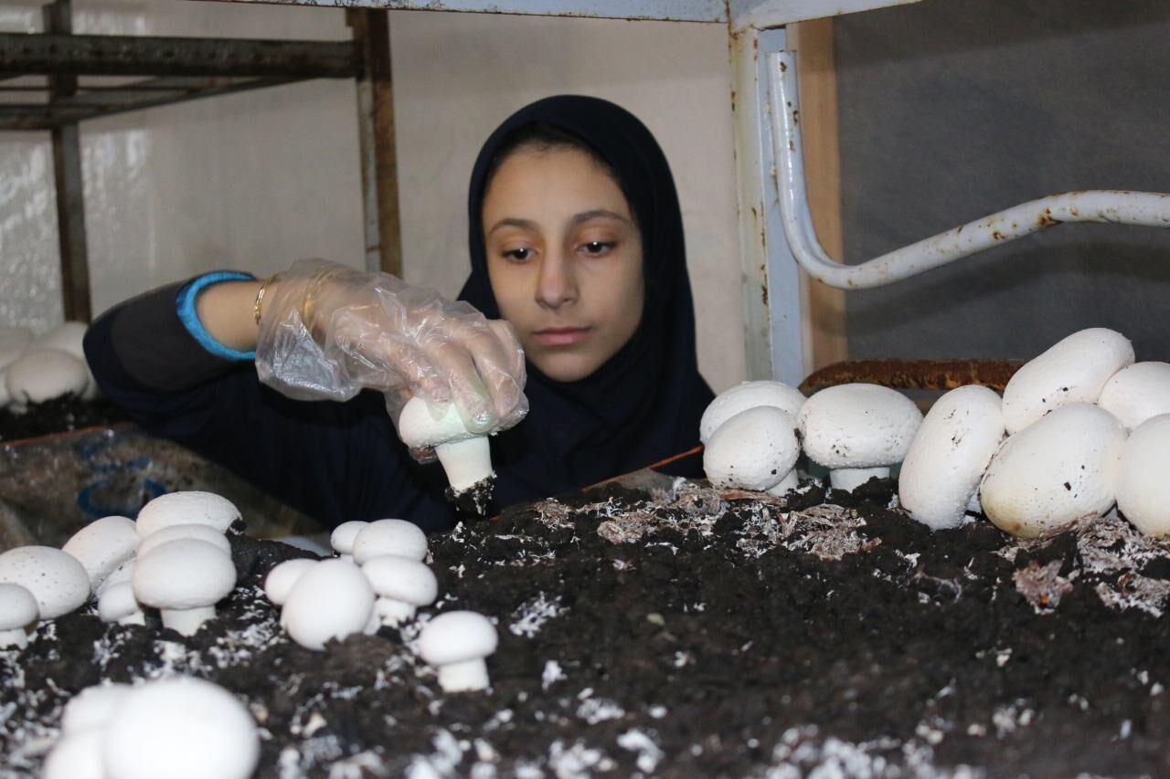 ۳۵۲ تن قارچ خوراکی در سبزوار تولید شد