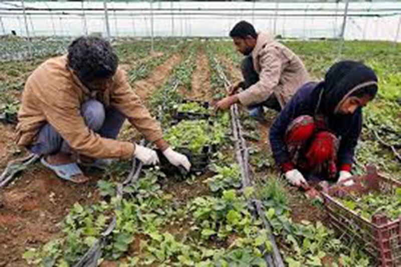 ۱۰ طرح کشاورزی جوین ۲۷۰ فرصت شغلی ایجاد کرد