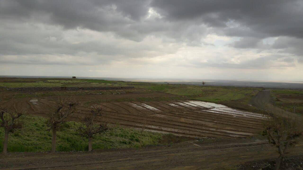 یکسوم مزارع فلفل داورزن بر اثر سیل خسارت دید