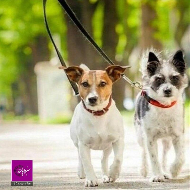 شورای فرهنگ عمومی سبزوار، «سگگردانی» را هم ممنوع کرده است